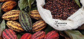 Des Petites Reines Camerounaises au Roi Suisse - NOANOA Chocolat